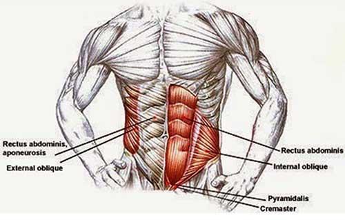 معرفی شش بخش آناتومی شکم
