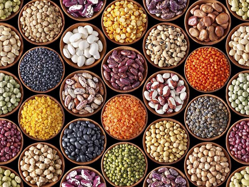 حبوبات حاوی پروتئین بالا